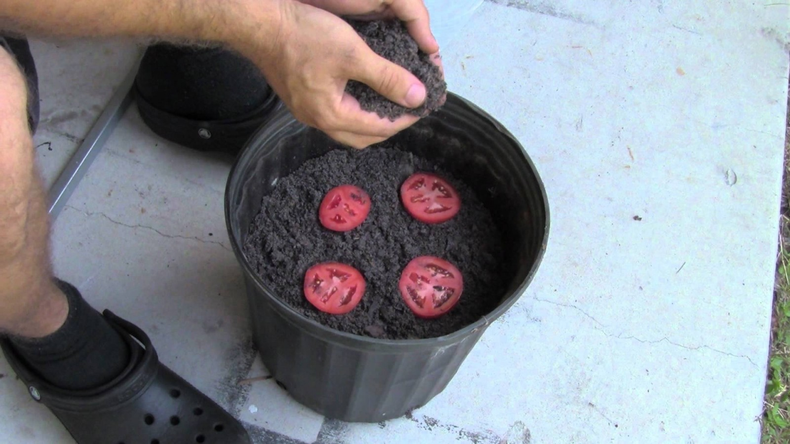 How to grow tomatoes...