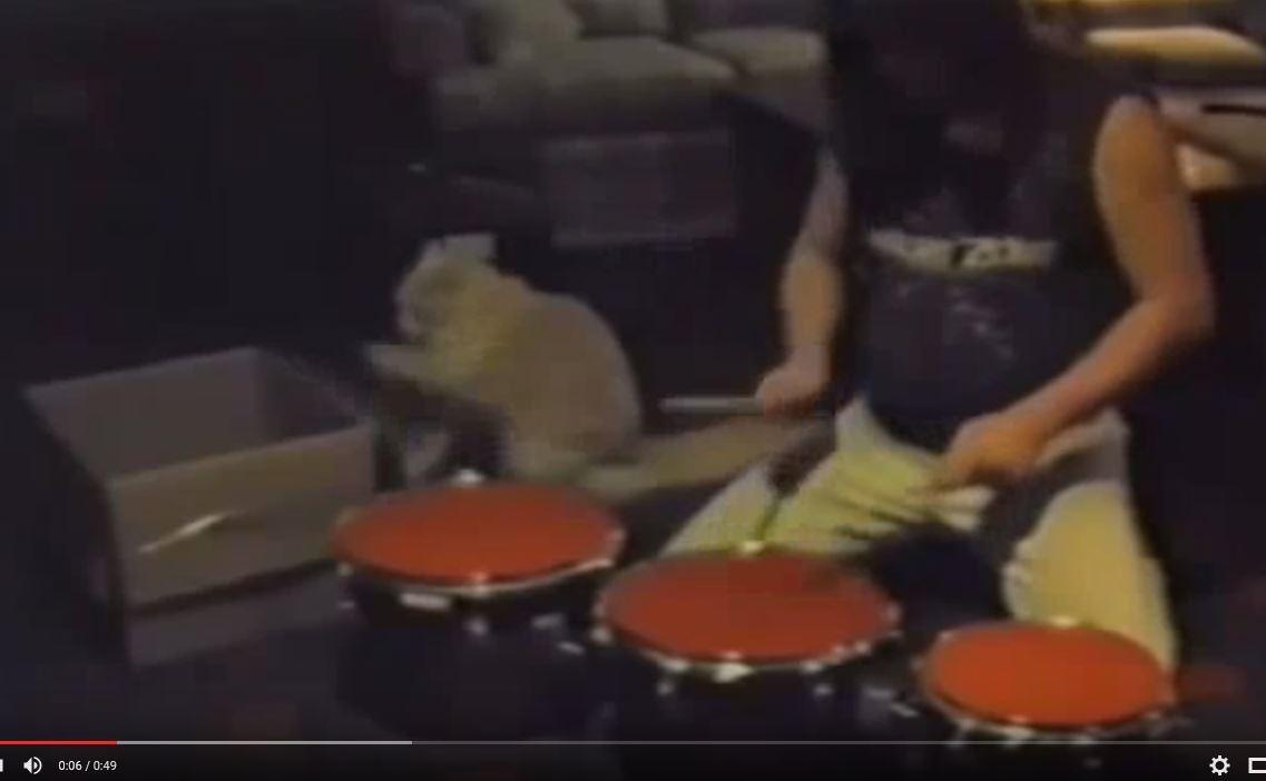 WATCH: This feline has a promising career in heavy metal drumming.
