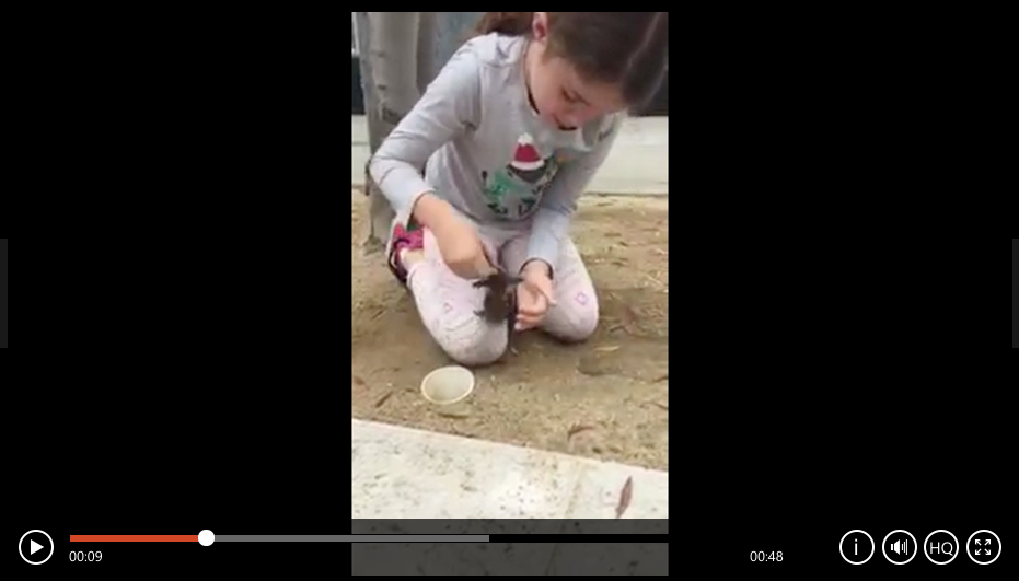 6 Year Old Helps Save Baby Ducklings Stuck In A Drain Pipe - WATCH