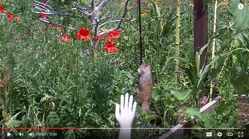 Have A Squirrel vs. Bird Feeder Problem? I Have Found The (Hilarious) Solution - WATCH
