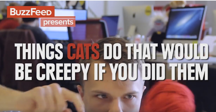 If humans acted like cats - WATCH!  Hilarious!