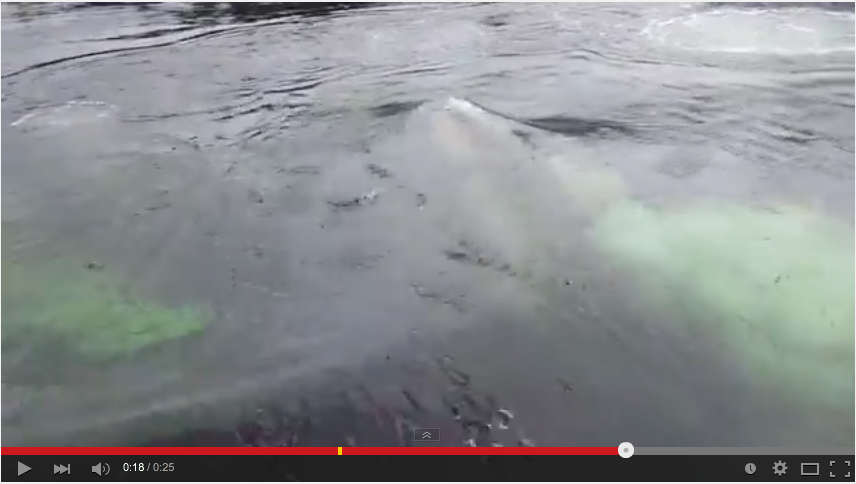 Unbelievably Large Whale Pops Up To Feed In Tiny Alaska Marina - WATCH