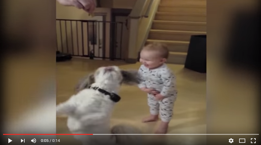 Adorable Baby Imitates Dog In Hopes Of Scoring Treats - WATCH