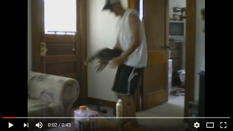 Little Raccoon Leaping Into Man's Arms Will Melt Your Heart With Cuteness - WATCH