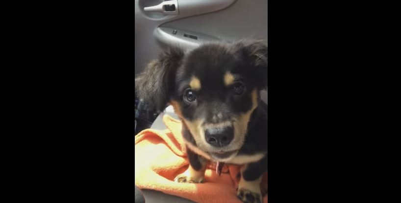 Puppy throws tantrum and it's the cutest thing EVER! Daily Dose Of Cuteness for sure.