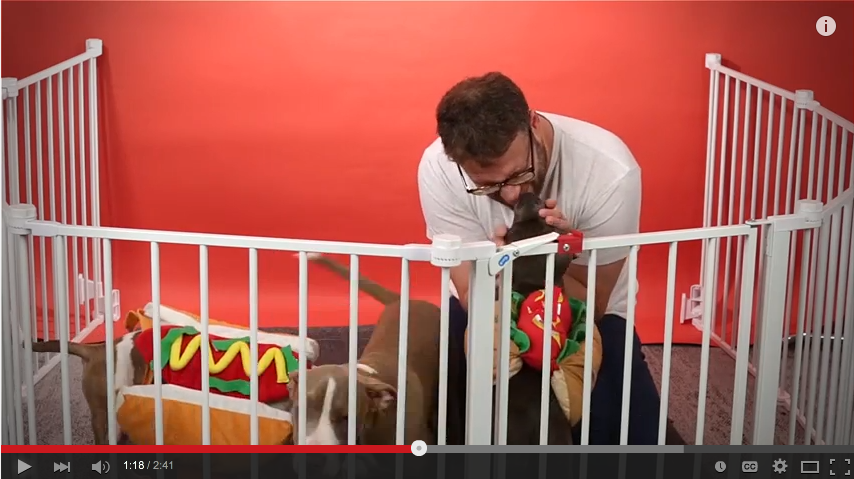 The Team At Buzzfeed Surprised Seth Rogen With A Bunch Of Dogs Dressed Like Hot Dogs - WATCH