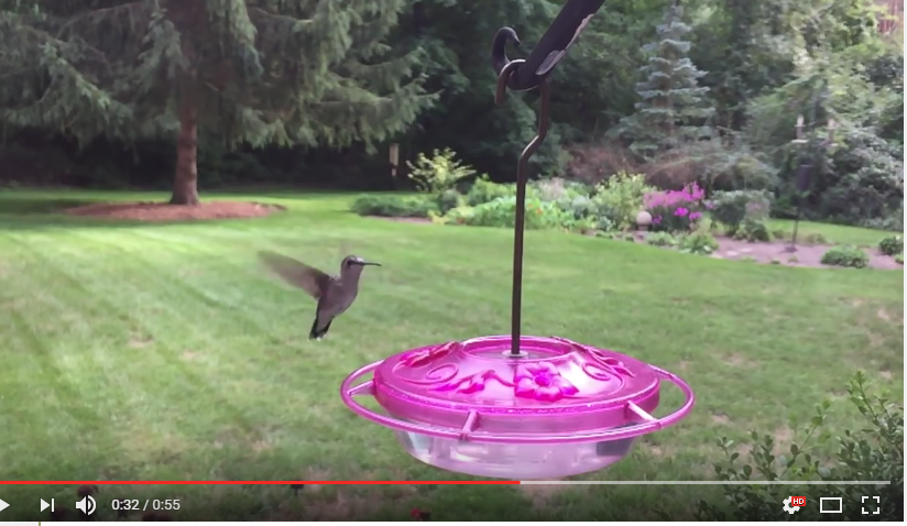 Wanna See A Hummingbird Flutter At 240 Frames Per Second.. You Know You Wannnnna - WATCH