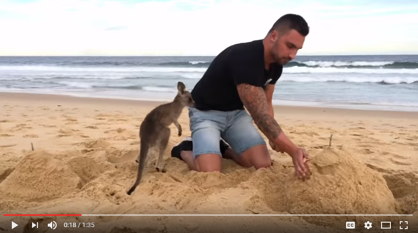 Life Can't Get Much Better When Your Best Friend Is A Baby Kangaroo - WATCH