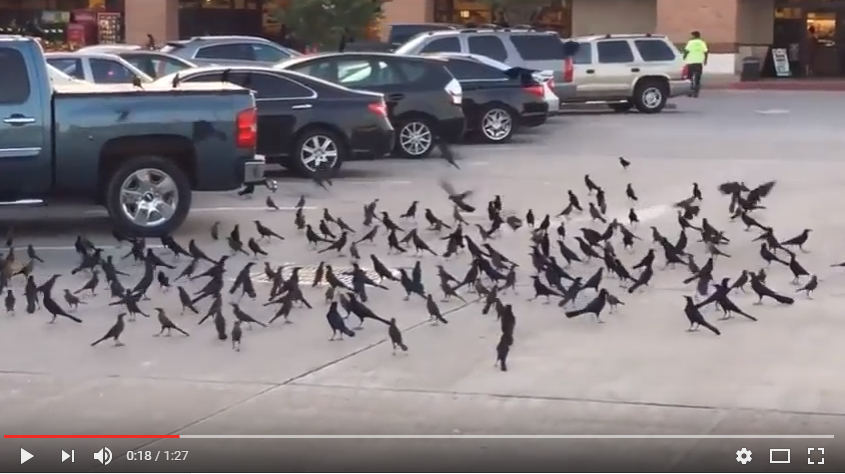 Terrifying, Yet Stunning Moment Hundreds Of Birds Show Up To Mourn Another - WATCH