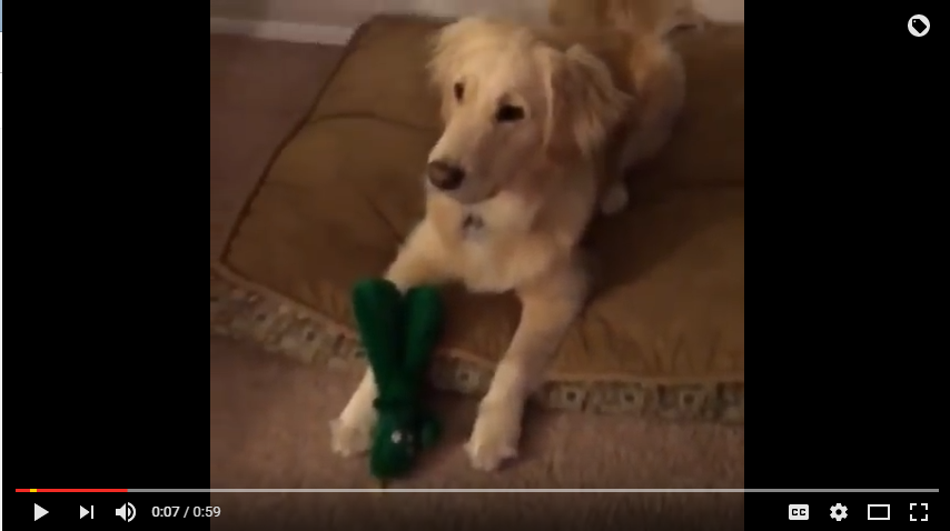 Owner Dresses Like Life Size Version Of Dogs Fvaourite Toy And The Reaction Is Adorable - WATCH