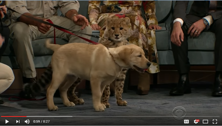 Jack Hanna Visits James Corden And Brings Best Friends - Cheetah & Puppy: WATCH
