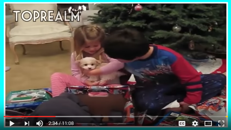 This Years Compilation Of 'Puppies For Christmas' Will Melt Your Heart - WATCH