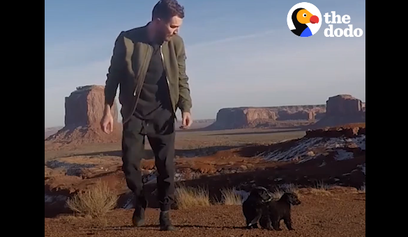 Guys Finds 2 Puppies During Road Trip, Decides To Bring Them Along - WATCH