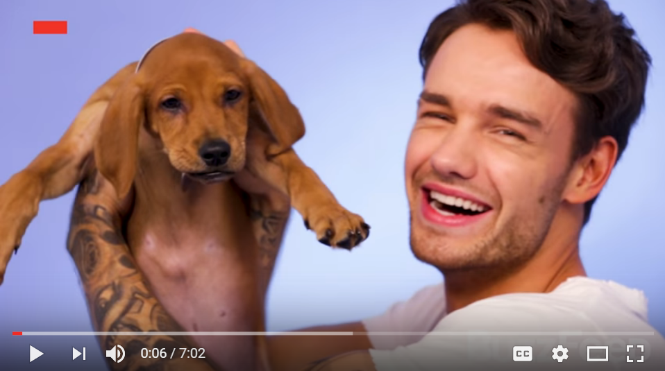 Liam Payne Answers The Hard Questions While Playing With Puppies - WATCH