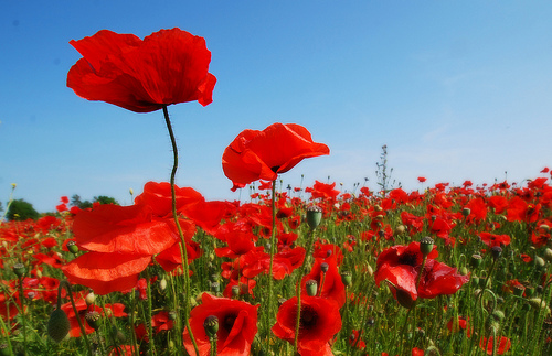 Where to pay your respects on REMEMBRANCE DAY in the Waterloo Region