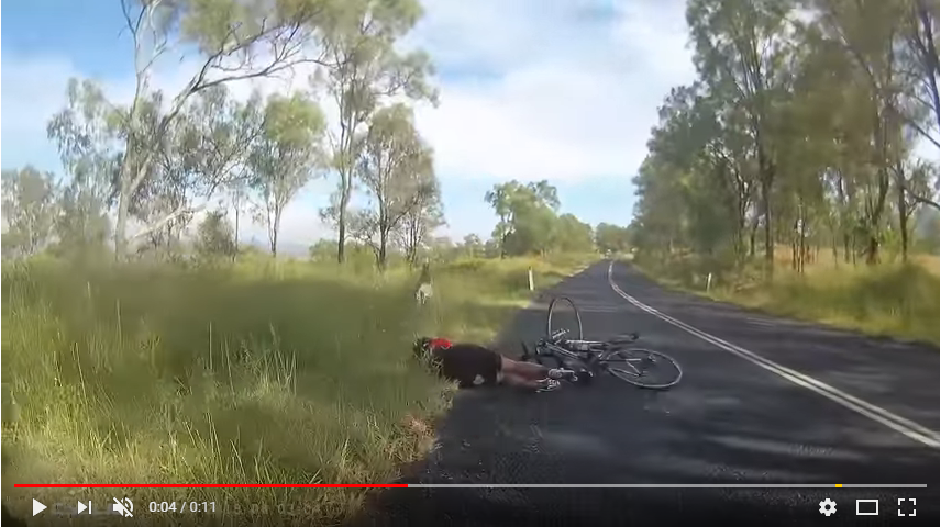 A cyclist gets knocked to the ground by a kangaroo. This is CRAZY!! WATCH