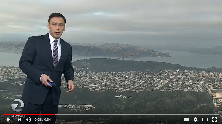 A bird photobombs a LIVE weather report. WATCH
