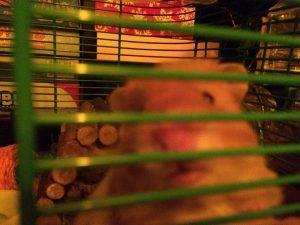 hamster-is-back