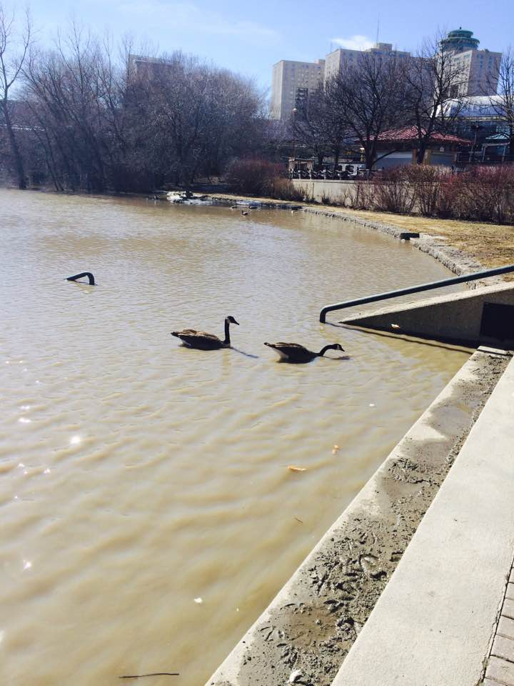 The FORKS is FLOATING! The FORKS is FLOATING!