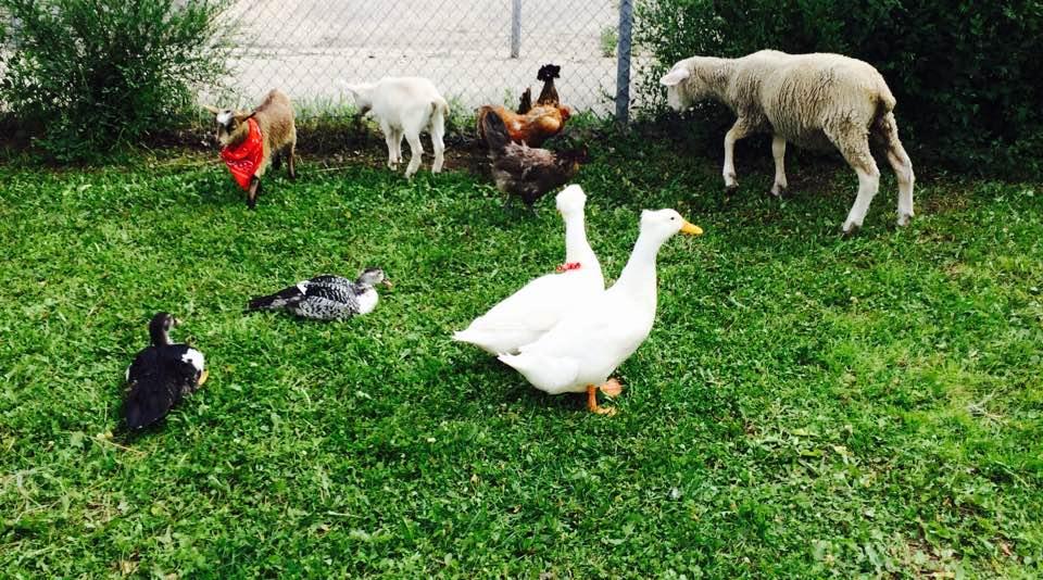 Canada Day in the Village - Petting Zoo Fun!