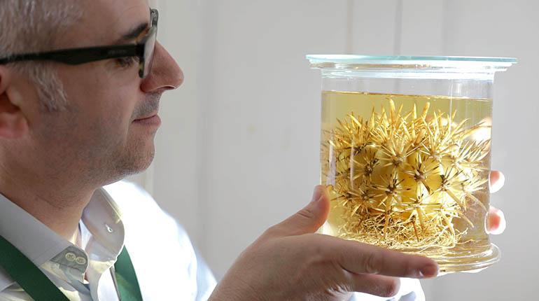 La ciencia catalogó el año pasado más de 1.700 nuevas especies de plantas