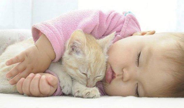 ¿El pelo de gato es peligroso para mi bebé?