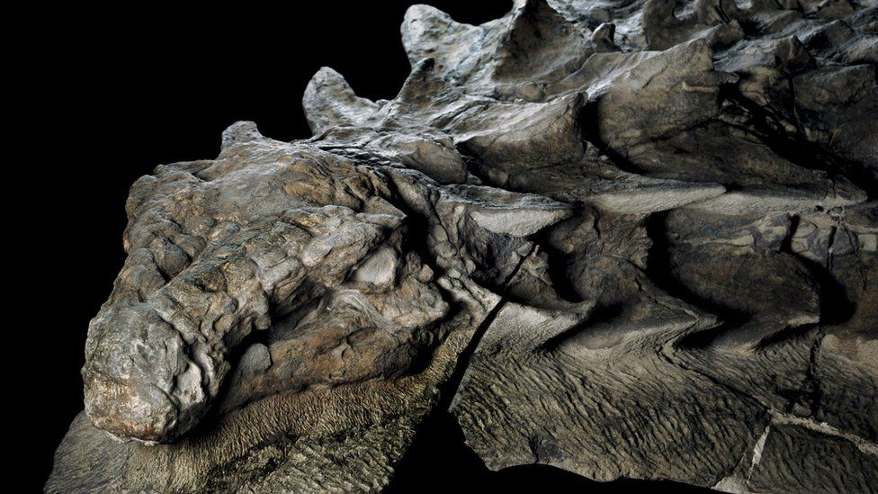 "Asombroso hallazgo de un fósil de dinosaurio ""intacto"" en Canadá que parece una estatua"