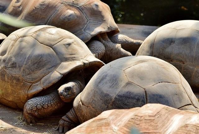 Cómo la Estación Espacial Internacional ayudará a proteger a las tortugas gigantes