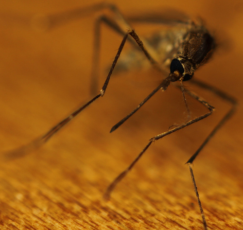 Cranbrook fighting potential mosquito population boom