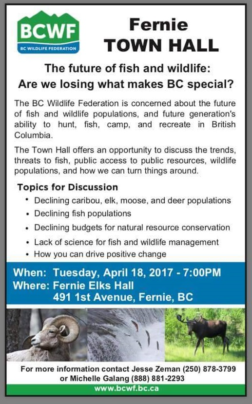 Town hall in Fernie to discuss declining wildlife populations