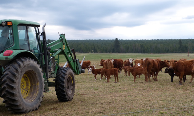 Kootenay Livestock Association receives $250k from Province