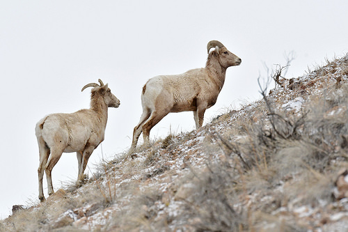 Teck to pay $200k following 2014 sheep mortality incident