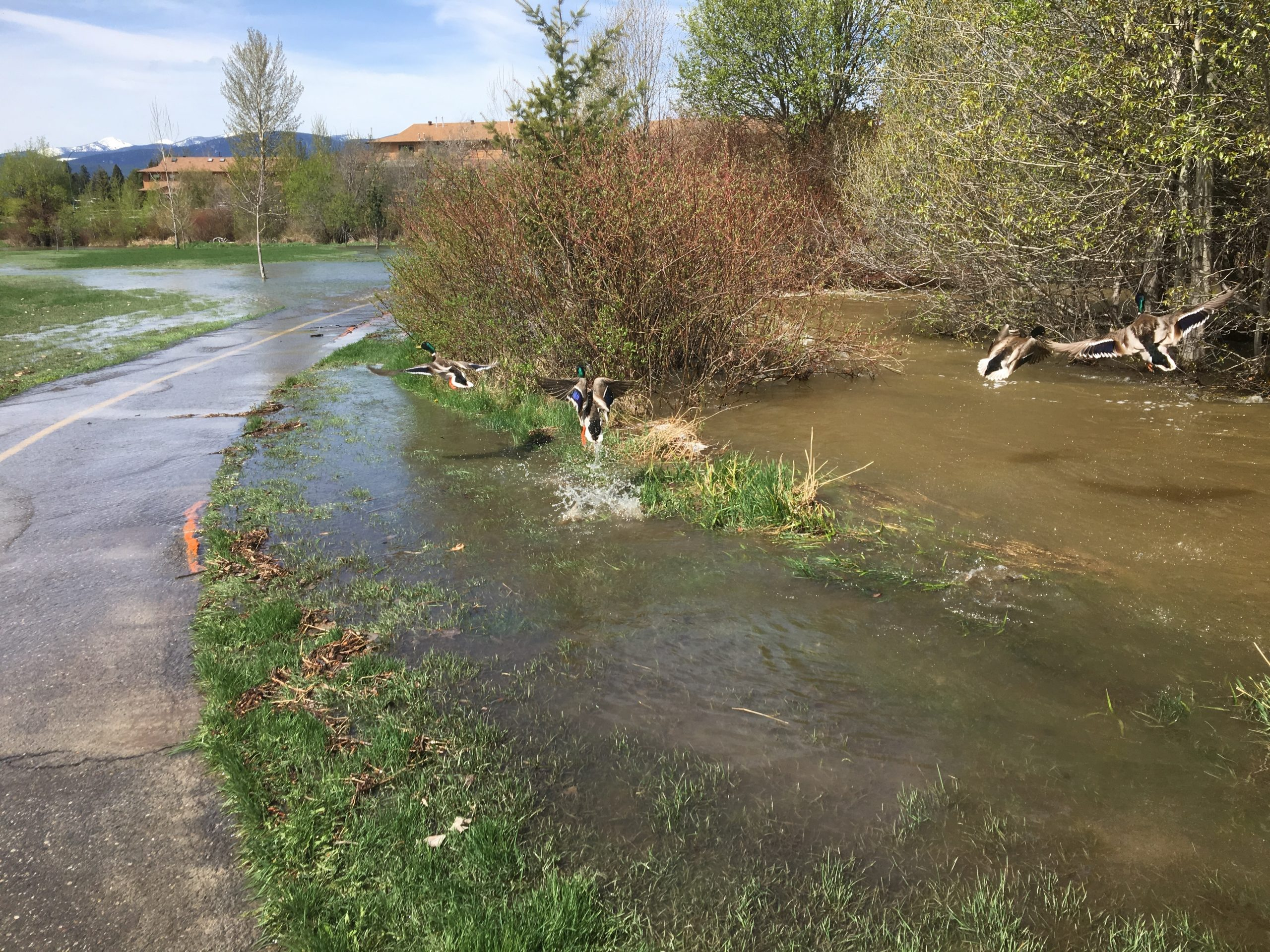 Cranbrook wants look at how climate change affects storm water infrastructure