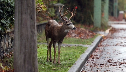 Cranbrook residents urged to report wildlife issues