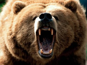 Two attacked by grizzly bear north of Kimberley