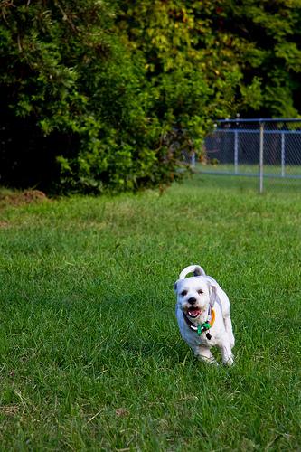 Sparwood seeks input on off-leash dog parks