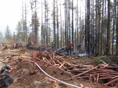 Wildsight optimistic ecosystems will be protected during salvage logging