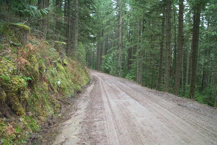 Resource roads top risk to East Kootenay grizzlies: Wildsight