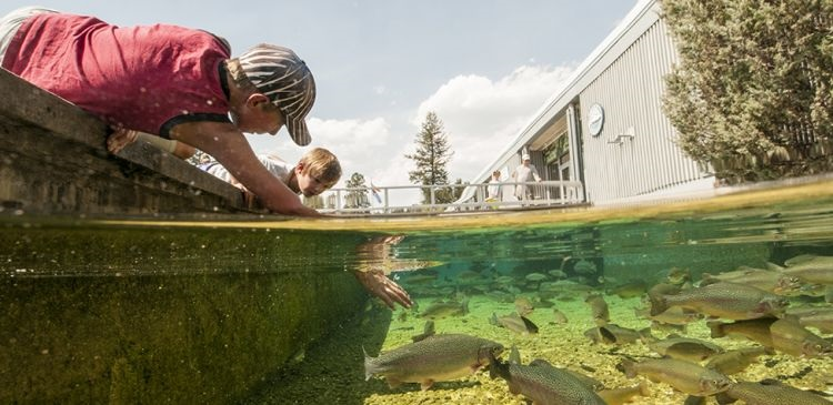 Kootenay Trout Hatchery increases staff for conservation education