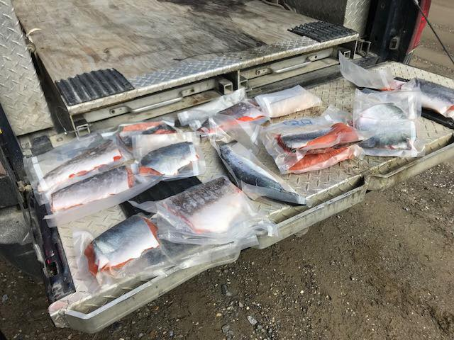 Anglers charged near Golden under Wildlife and Fisheries Acts