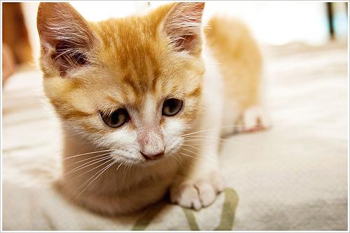 Professional Cat Cuddler?