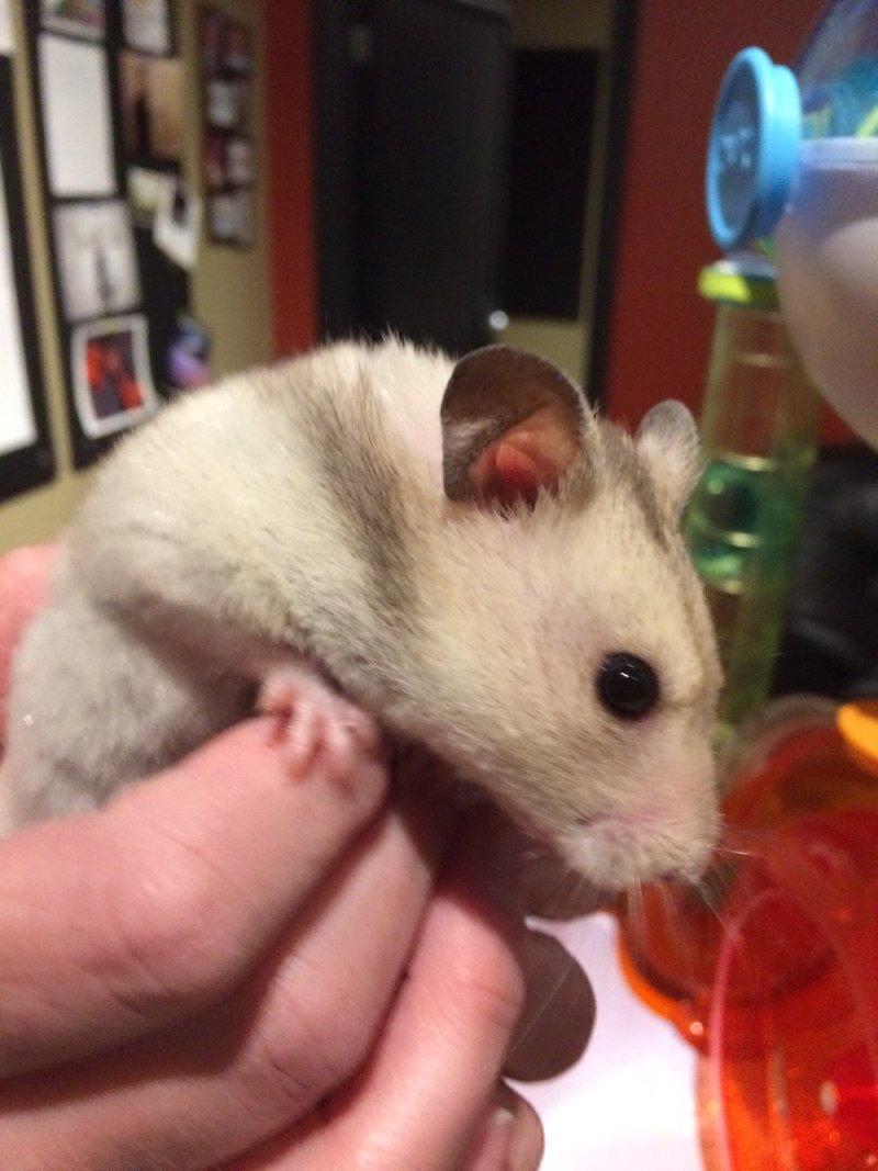 hamster-habitat-2