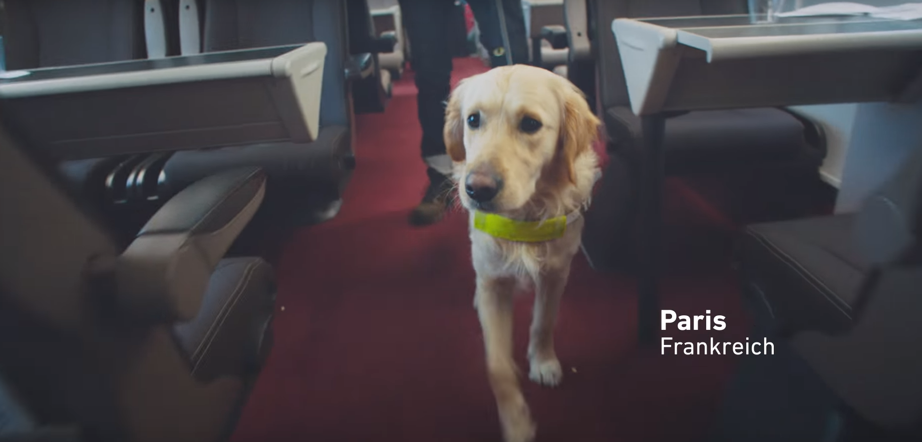 Burger King Helped Train A Guide Dog To Track Whoppers!