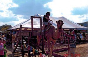 steve-on-camel-3
