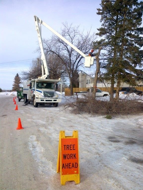 Tree pruning starting this week in Grande Prairie