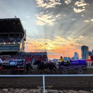 picture from the Calgary Stampede Chuckwagons FB page