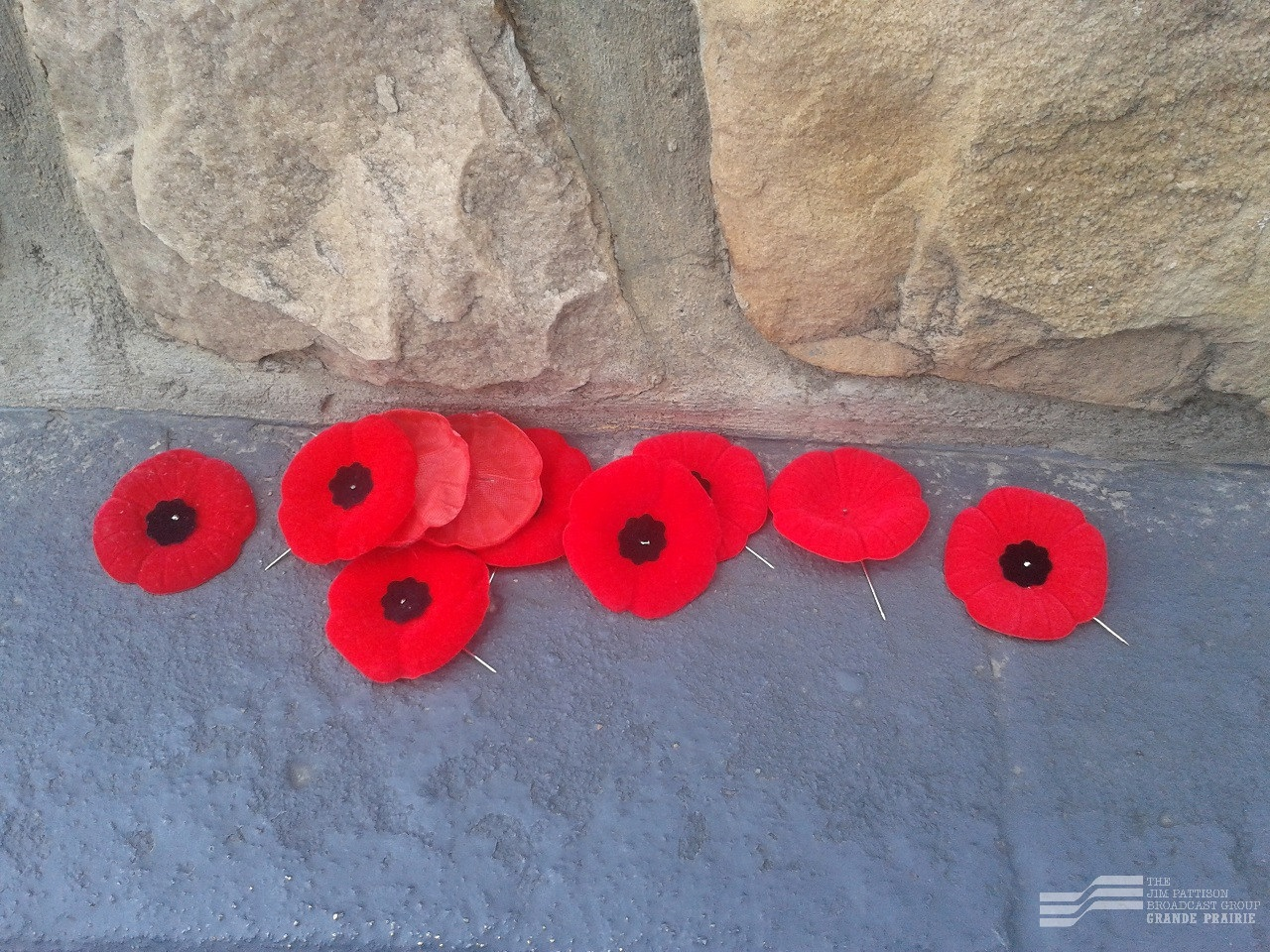 Poppy campaign starts today