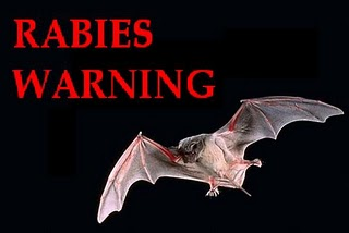 RABIES INFECTED BAT FOUND IN LEDUC
