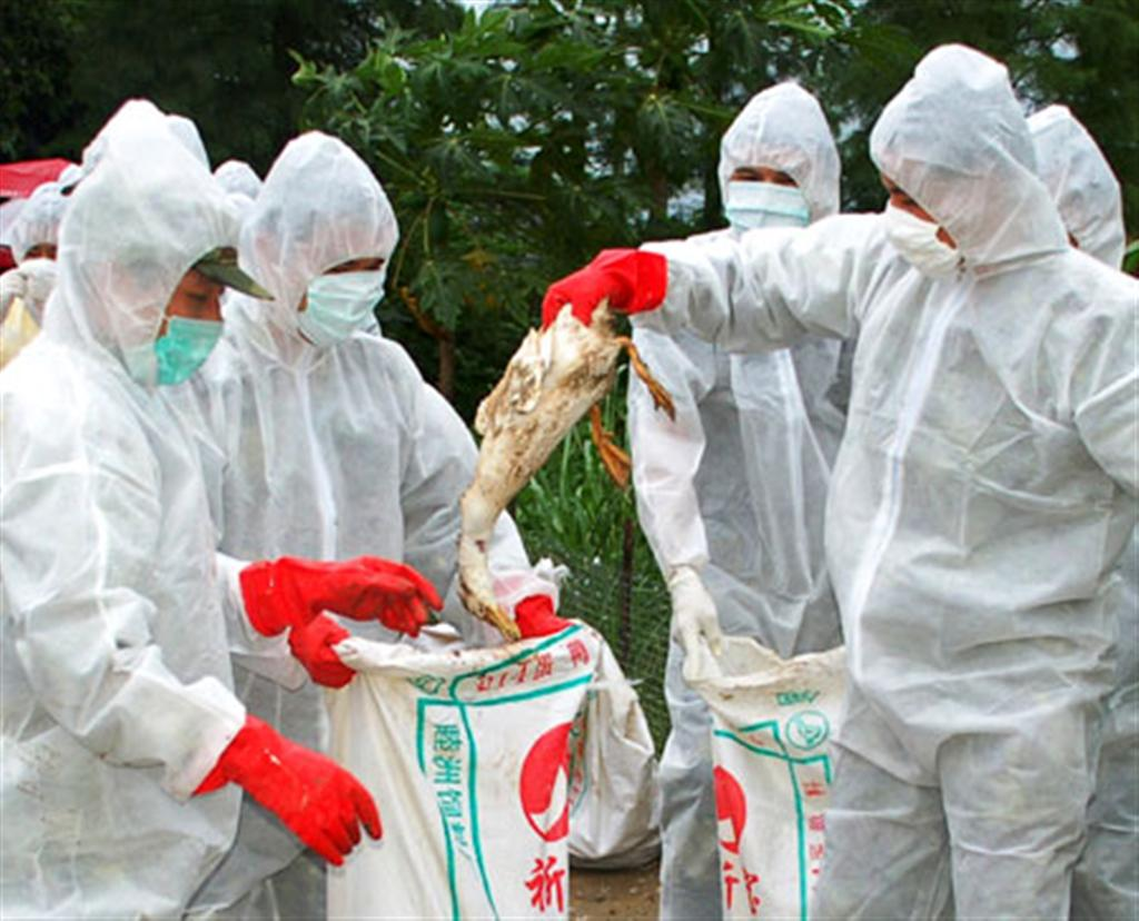 BIRD FLU IN ASIA