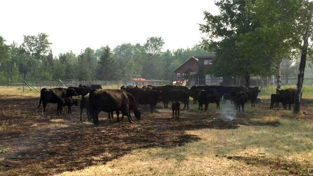 HELP FOR BC RANCHERS